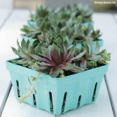 Berry Basket Succulent Planters at thehappyhousie.com-10