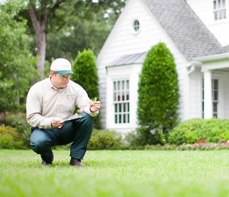 lawn-assessment