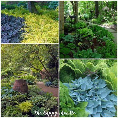 Stunning Shade Gardens