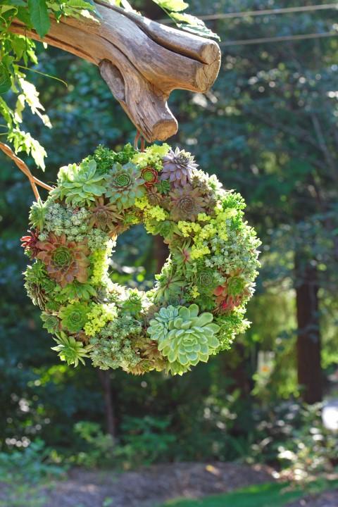 A succulent wreath.