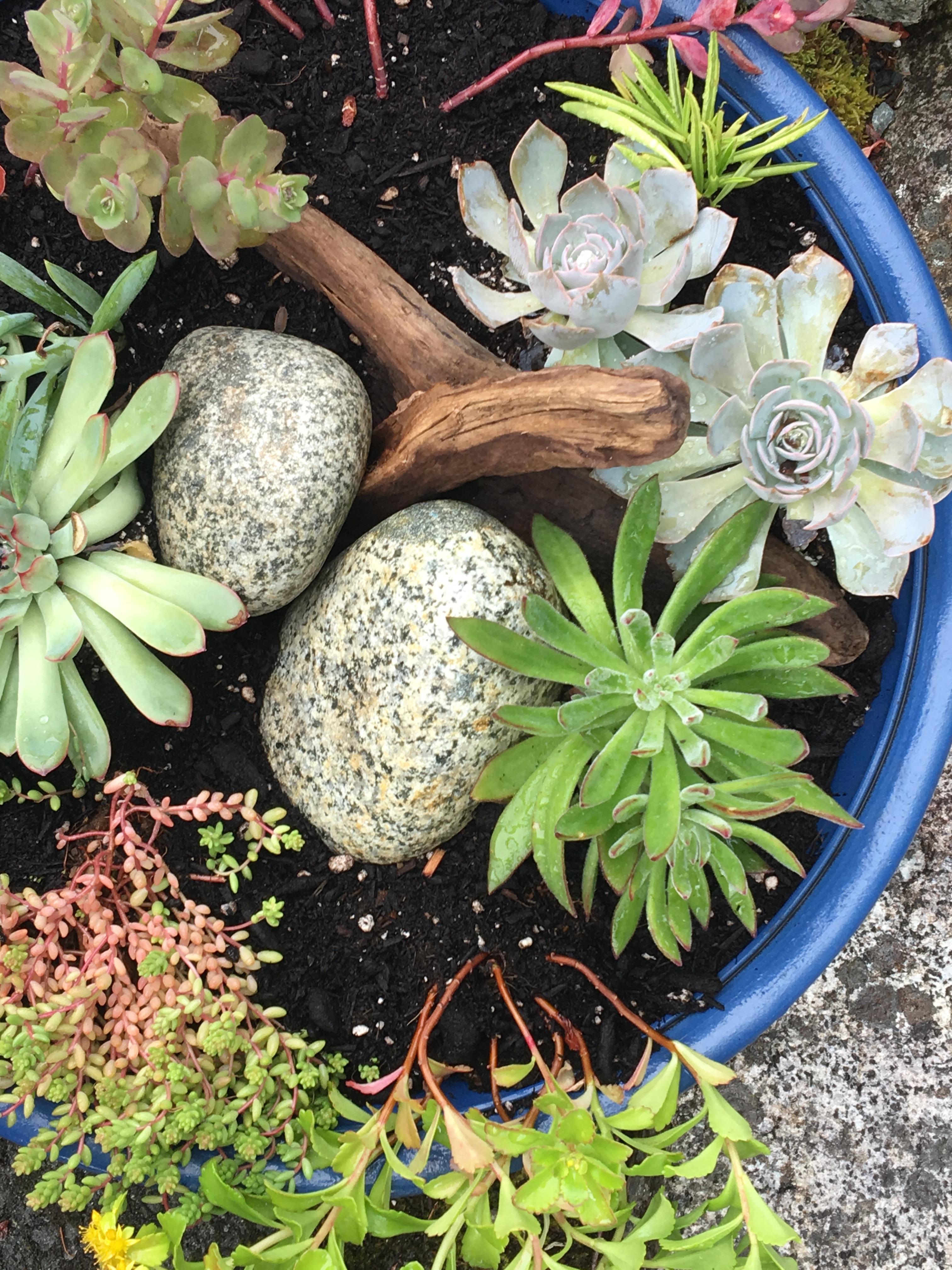 Diy Succulent Planter Ideas The Happy Housie